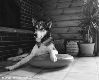 Physio chien