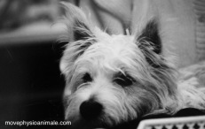 physio pour chien