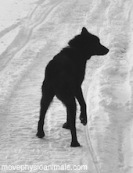 physio pour chien de sport
