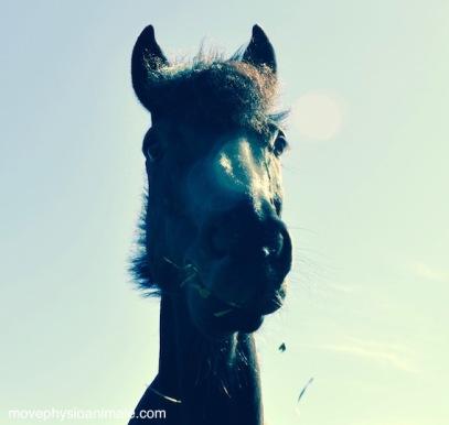 physiothérapie pour chevaux