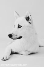 physiothérapie pour chien