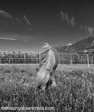 physio poney